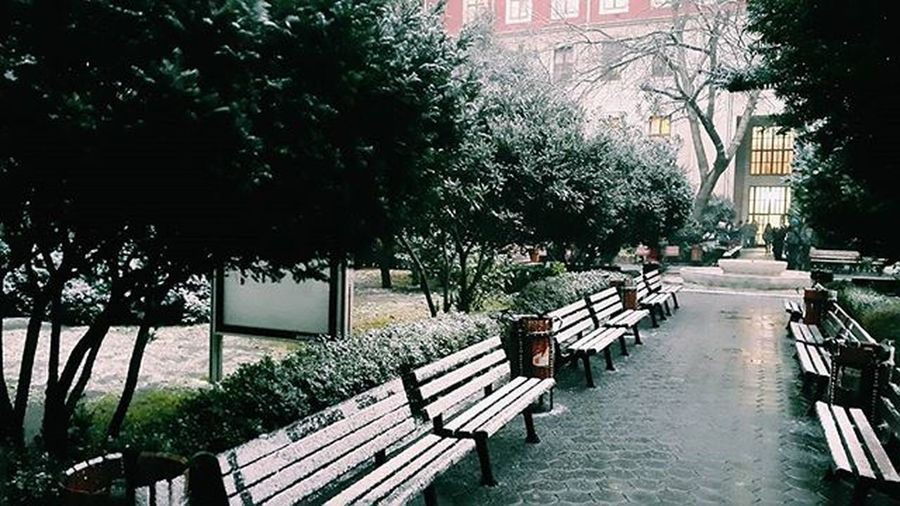 ❄ Winter Snow