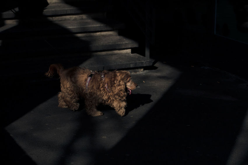 Street Photography series Dog Domestic Animals Light And Shadow Lights And Shadows No People One Animal Open Edit Pets Shadow Street Photography The Street Photographer - 2017 EyeEm Awards