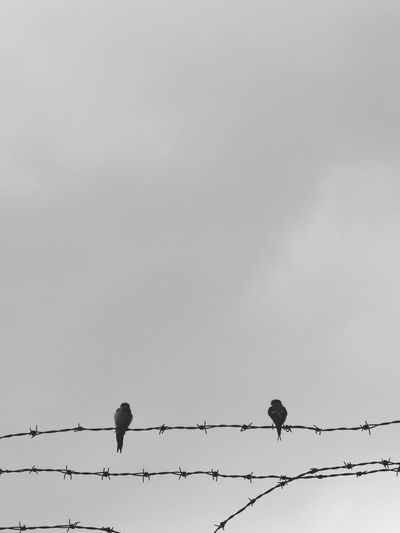 Low angle view of birds perching on barbed wire against sky