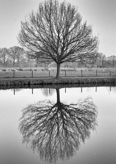 Tree reflected in calm water Bunnik Reflection First Eyeem Photo
