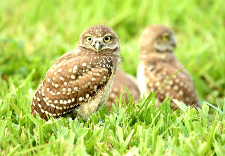 beauty is nature Bird Owl Bird Of Prey Reptile Pets Perching Close-up Grass Green Color