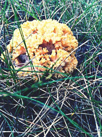 Mushroom Nature
