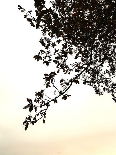 Nature Tree Branch Beauty In Nature Sky Outdoors