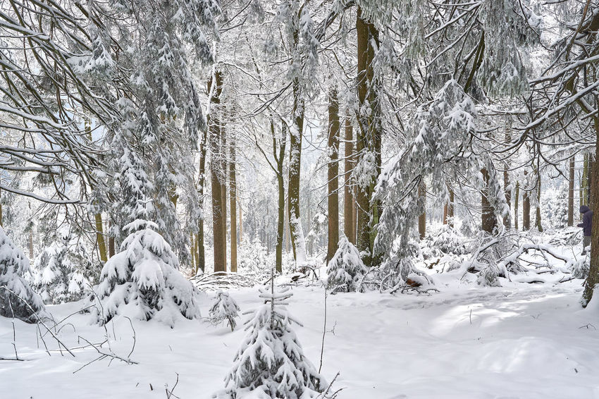 Bare Tree Beauty In Nature Cold Temperature Day Nature No People Outdoors Scenics Snow Tranquil Scene Tranquility Tree Weather White Color Winter