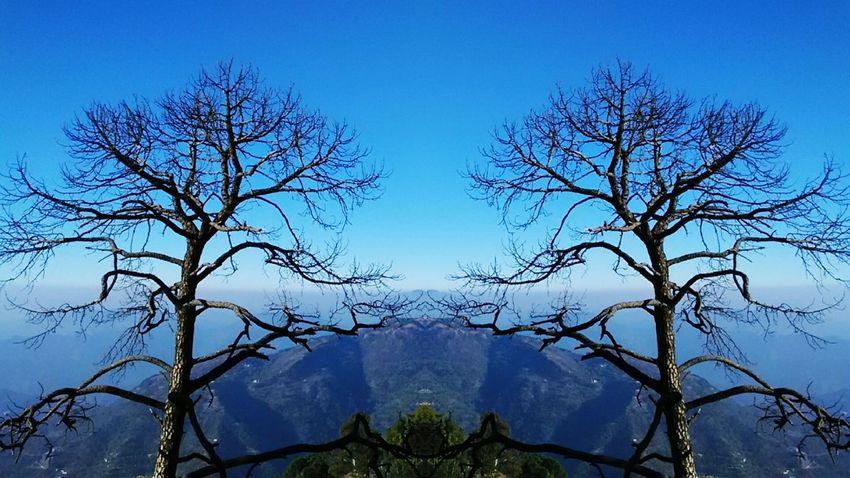 The OO Mission 43 Golden Moments Kasauli Himachal Pradesh Pine Tree Mountain