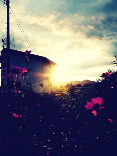 Relaxing EyeEm Flower Sky And Clouds Warking♡
