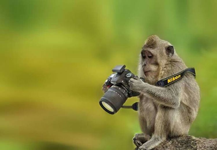 Monkey Nikonphotography Taking Photos Hands At Work Enjoying Life Animal Photography Artphotography Learning Photography Macaca Fascicularis
