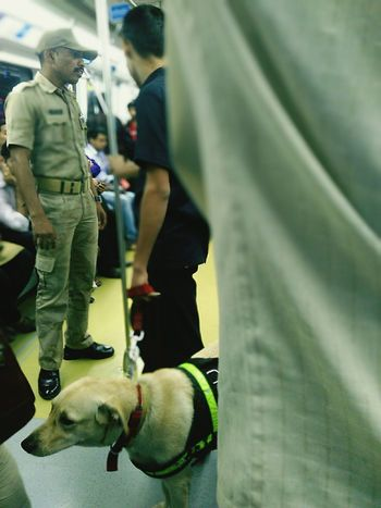Candid Focus On Foreground Animal Themes Domestic Animals Dog Adults Only Adult Day Photography Mumbaimerijaan Transportation Public Transportation Rail Transportation One Person Pets Dogs Dogslife Dogs Of EyeEm