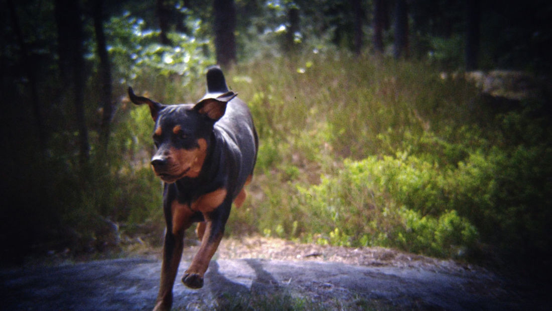 Running Hope ©️JaniVauhkonen One Animal Domestic Animals Animal Themes Pets BestofEyeEm Best Shots EyeEm JaniVauhkonen EyeEm Outdoors LG G4 BeastgripPro