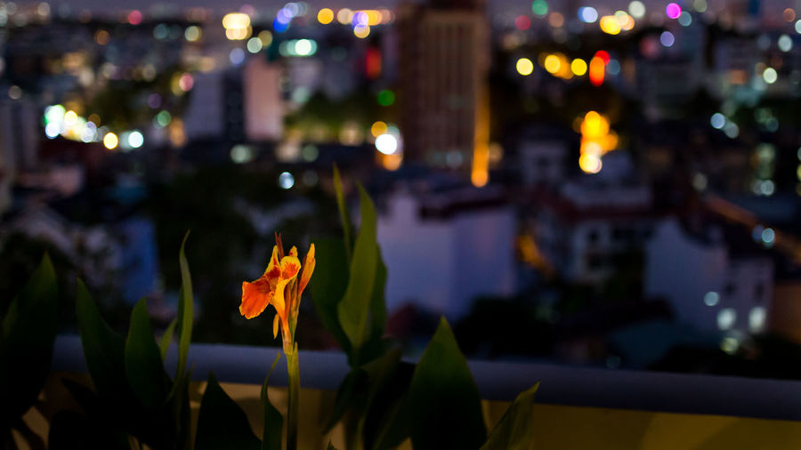 Flower blooming against illuminated city at night