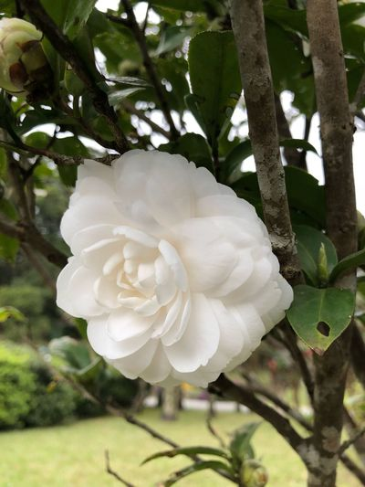 Flower White Color Growth Petal Beauty In Nature Nature Fragility Flower Head No People Day Freshness Plant Focus On Foreground Close-up Tree Blooming Outdoors Leaf