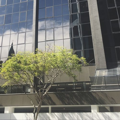 green Green Tree Building Mirror City Brisbane Reflection