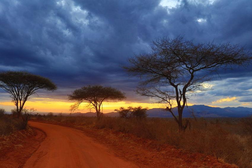 Africa African Safari Cloud - Sky Dramatic Landscape Dramatic Lighting Dramatic Sky HDR Collection Kenya Landscape National Parks Kenya Red Soil Scenics Single Tree Storm Cloud Sunset Travel Destination Tsavo West