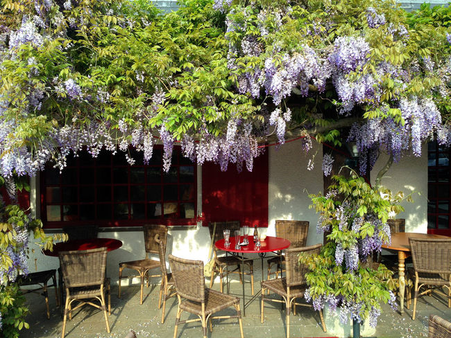 A beautiful place to sit outdoors at this French Bar and cafe, have to love France. Brittany Cafe In Brittany France Day Drinking In France Europe Trip Flower Cafe Flowers French Bar Restaurents In Bloom Outdoor Bar France Outdoors Place Setting Restaurant Springtime Stay In Brittany Summer Table Travel France