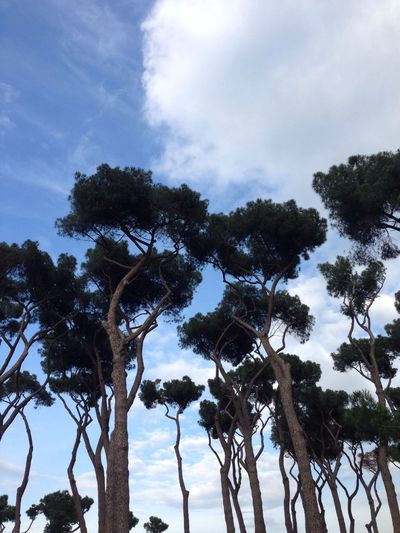 In Rome Sky And Trees Site Seeing Waiting