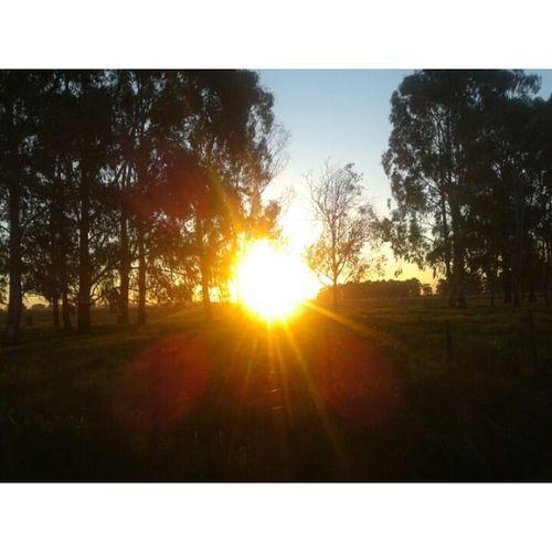 Sun Sunset Trees ☀☀????