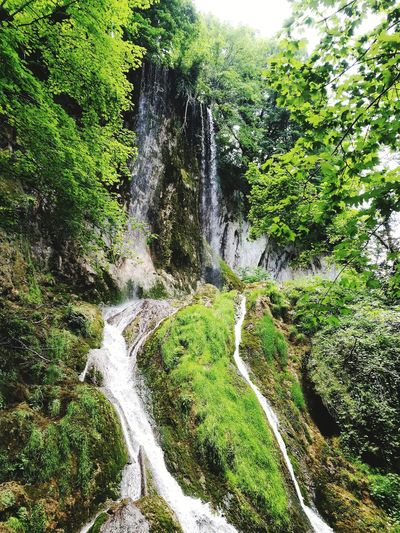Papuk Nature Croatia ❤ Slavonia EyEmNewHere Papuk Naturepark Waterfall Water Water Tree Close-up Grass Green Color Green Greenery Lush Vegetation Foliage Spring Woods Scenery Relaxing Moments Botanical Daytime Blossoming  Flora Flowing Stream - Flowing Water Falling Water Moss