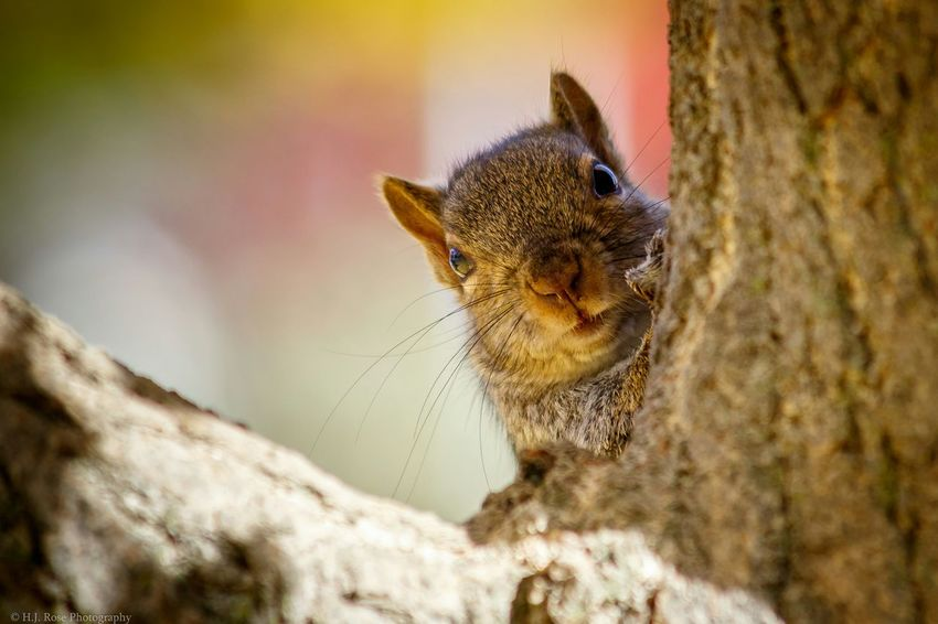 Can I help you sir? Squirrel! Squirrel Closeup Nature On Your Doorstep Squirrel Squirrel Photo Squirrelporn  SquirrelPhotoOp Squirrelintree My Best Photo 2015 Canon 7D MarkII Canon EF 100-400 L IS USM
