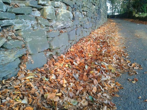 Low Angle View Autumnleaves Drystonewalls Autumnbeauty Autumn Leaves Pathways Sunset Scenics Tranquility Pathway Autumn Autumnbeauty Beauty In Nature Leaves Shadow Outdoors Tranquil Scene Landscape Sunlight No People Nature Day