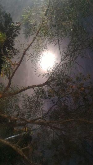 Nilav.... Full Moon Technopark Night View Asus Zenfone Photography
