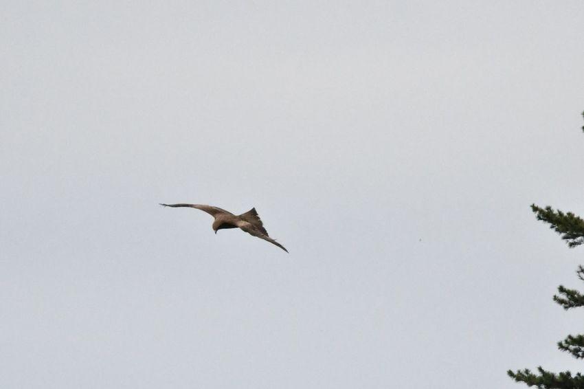 Animal Wildlife Animals In The Wild Animal Themes Animal Bird Vertebrate Flying