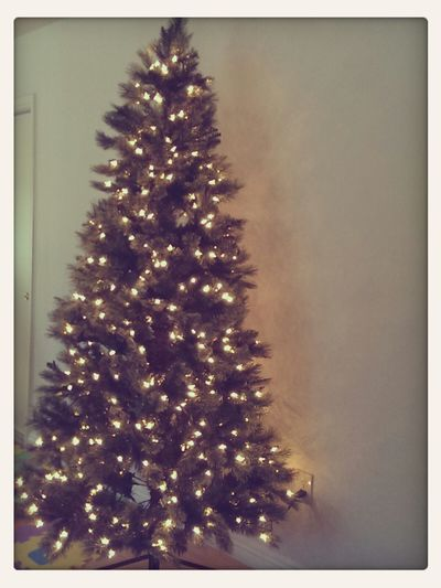 Christmas Tree Wanna Be Photographer Plain & Simple