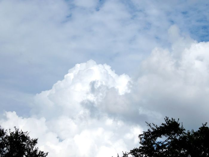 Sky Cloud - Sky Low Angle View Nature Tree Beauty In Nature Day Tranquility Scenics No People Outdoors Tranquil Scene