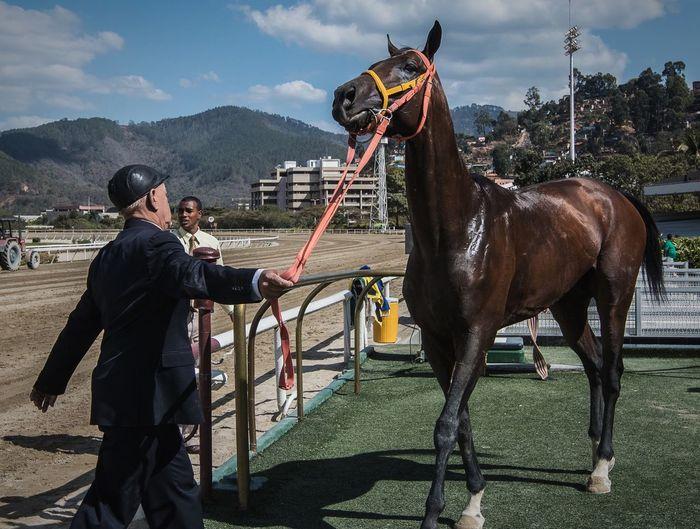 Roy's revenge is the winner Sports Photography Horse Horse Riding Caballos EyeEmNewHere