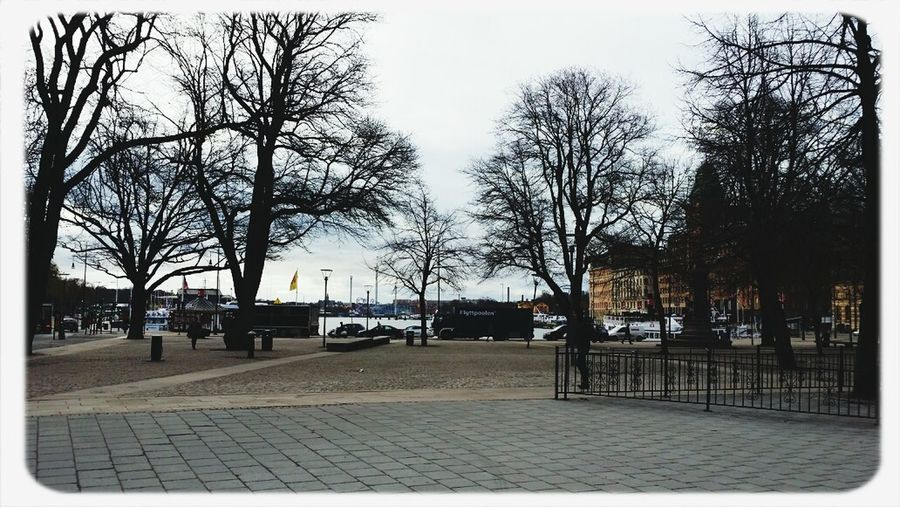 Walking Around Raoulwallenberg The Raoul Wallenberg Square In Stockholm... Winter Urban Tree