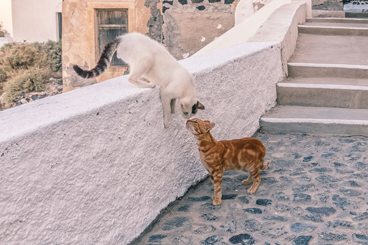 Two dogs standing on staircase