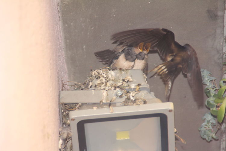 #swallow Birds Of EyeEm  Animal Themes Animals In The Wild Bird Day Flyingbird Mammal Motion Nature No People One Animal Outdoors Water Zwaluw Zwaluwen