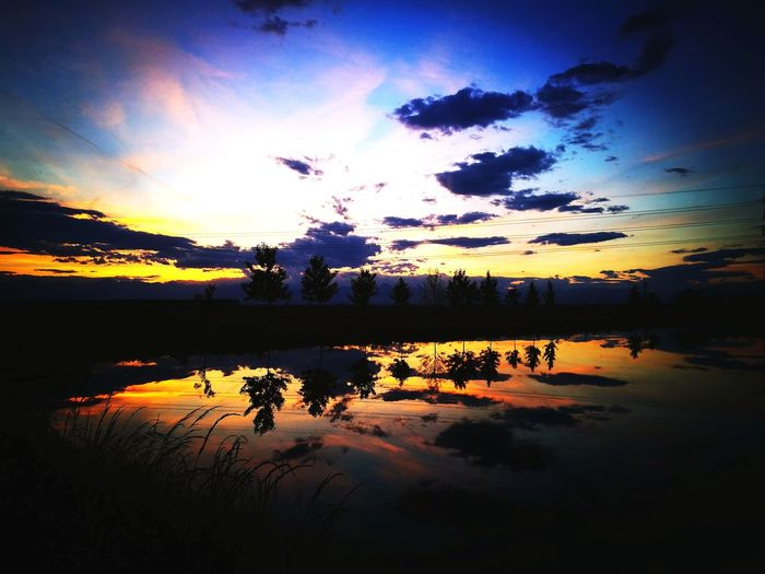 Il riflesso nelle Risaie Piemontesi Risaie Streetphotography Nature Photography Nature Sky Cieli Bird Water Sunset Living Organism Silhouette Lake Reflection Tree Flock Of Birds Sky Dramatic Sky Pixelated Sky Only Romantic Sky