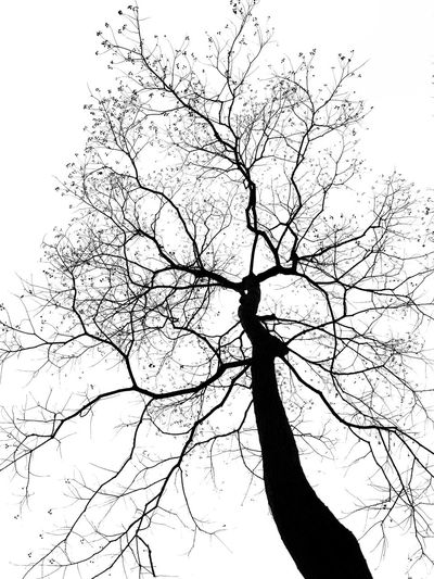 Branch Bare Tree Tree Silhouette Low Angle View Nature Sky No People Outdoors Beauty In Nature