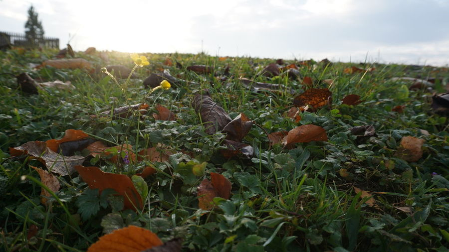 autumn mood #3 Nature InTheMiddleOfNoWhere Autumn Colourfulleaves Flower Field Sky Close-up Grass