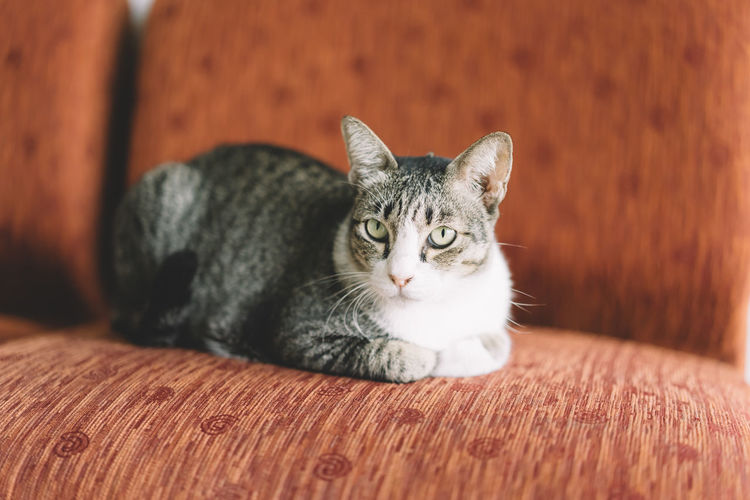 Animal Themes Cat Close-up Day Domestic Animals Domestic Cat Feline Indoors  Kitten Looking At Camera Mammal No People One Animal Pets Portrait Whisker
