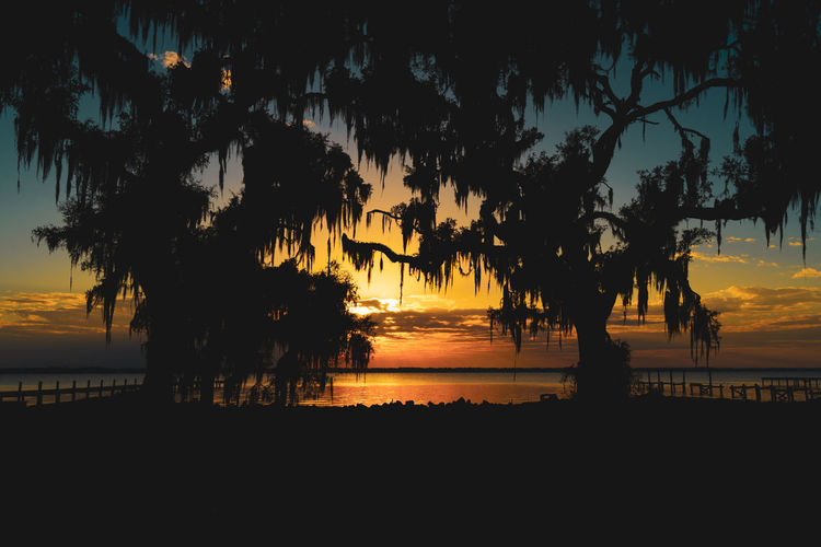 Silhouette trees by sea against orange sky