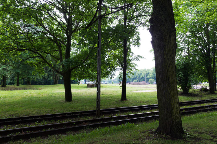 Silence Scenery Noone Tallinn Estonia Oldtown Travel Trip Photograph Photography Takeawalk  Nature 静寂 散歩 旅 一人旅 旅行 木 自然 影 静か 線路 写真 Rail Park History Nopeople Moments Tree Tree Trunk Field Rural Scene Sky Grass Landscape Green Color Cultivated Land Willow Tree Pathway Woods Countryside Treelined Walkway Narrow Greenery The Street Photographer - 2018 EyeEm Awards The Traveler - 2018 EyeEm Awards