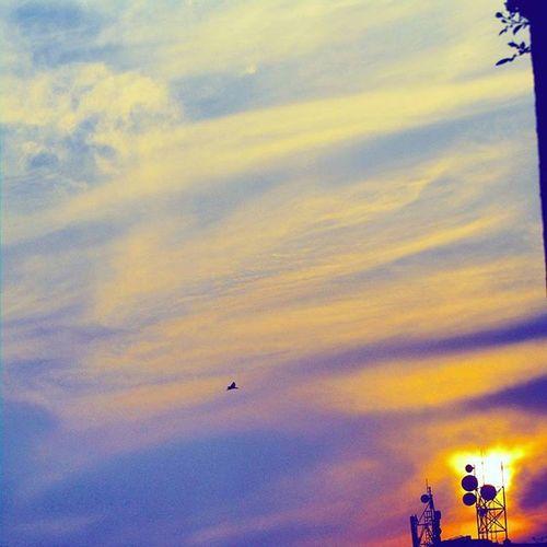 Awesomeness...sunsetness...sweetness...fullyloaded. Birds going home. Sunsetlover Sunsetphotography Birds TextGram Photographers_of_india Mumbaiphotography