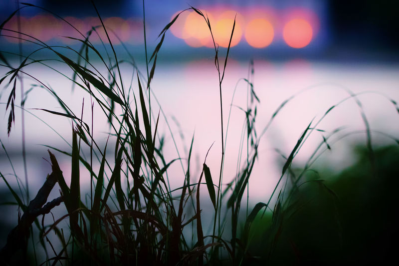 Evening walk on the rhine Beauty In Nature Close-up Dark Evening Walk Grass Nature No People Outdoors Rhine