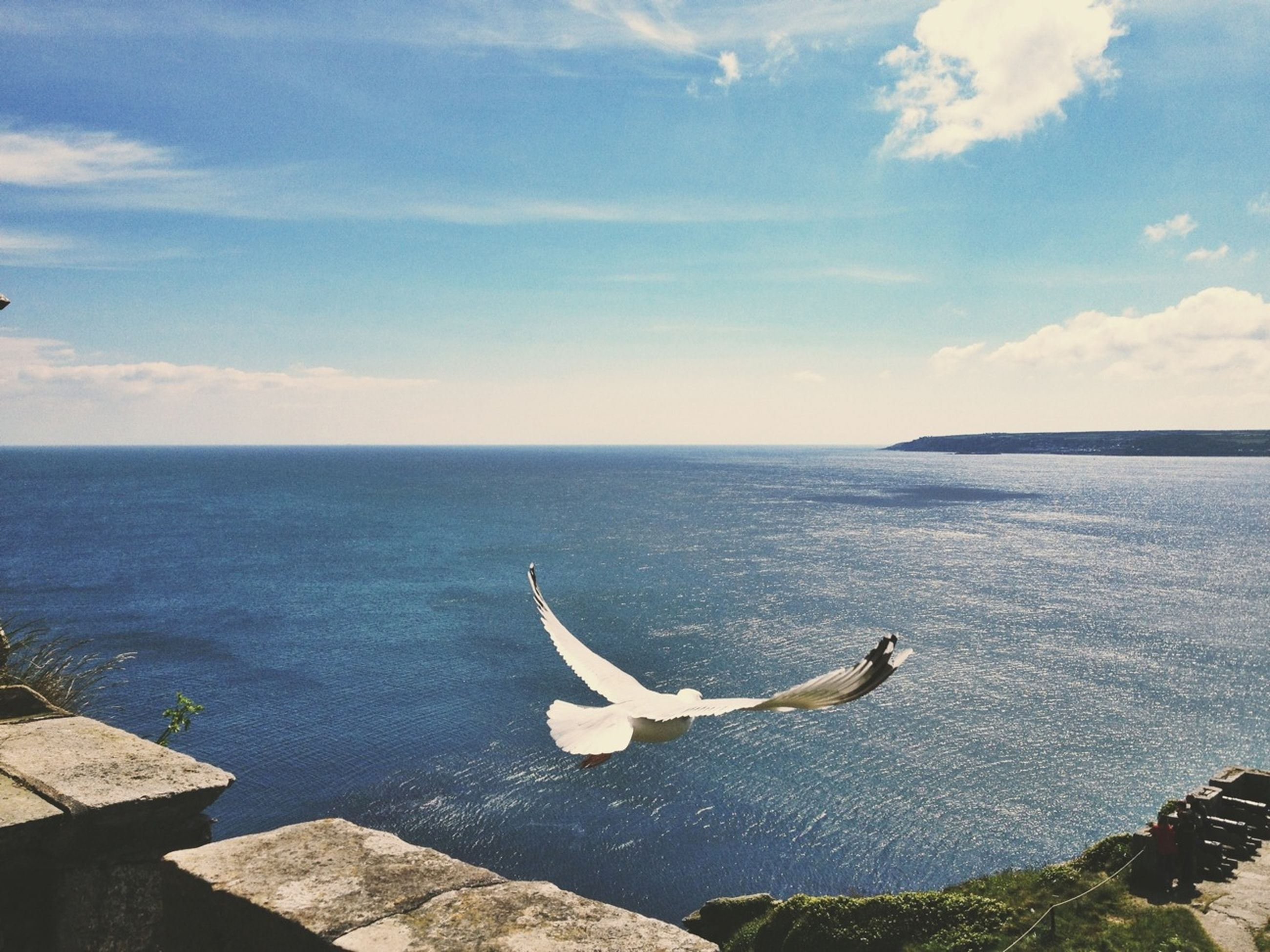sea, water, horizon over water, sky, tranquil scene, scenics, blue, tranquility, beauty in nature, nature, bird, flying, cloud, idyllic, cloud - sky, outdoors, day, no people, seagull, seascape