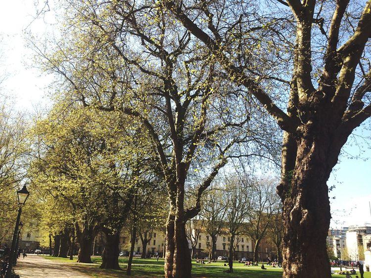 Spring Into Spring Bristol Trees