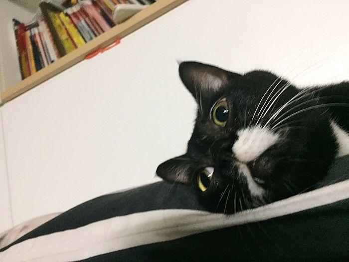 The Week On EyeEm Cat Photography Taiwan
