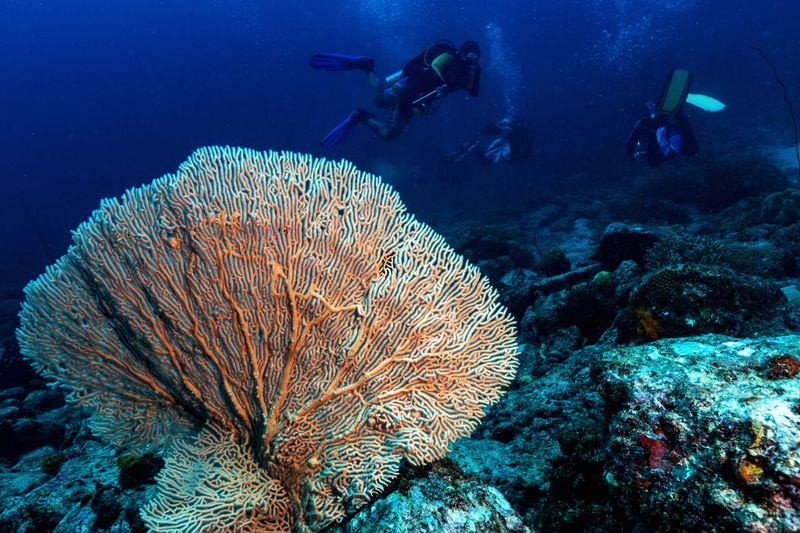 Underwater activity Dive Site Divelandscape Diving Diving Time Coral Fan Scuba Diving Underwater UnderSea Adventure Exploration Sea Aqualung - Diving Equipment Coral Swimming Sea Life Scuba Diver Leisure Activity Real People Nature Water People