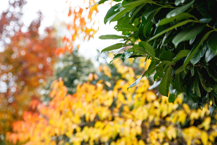 Autumn in London Plant Tree Beauty In Nature Growth Leaf Plant Part Autumn Nature Yellow No People Orange Color Day Green Color Focus On Foreground Tranquility Close-up Branch Change Outdoors Selective Focus Maple Leaf Leaves Travel Travel Destinations Autumn Autumn Mood