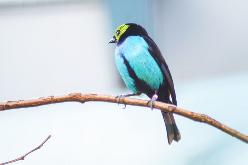Portrait of a bird Bird Vertebrate Animal Wildlife Perching Animal Animal Themes Animals In The Wild One Animal Branch Tree No People Day Focus On Foreground Nature Plant Outdoors Close-up Low Angle View Blue Beauty In Nature Beak