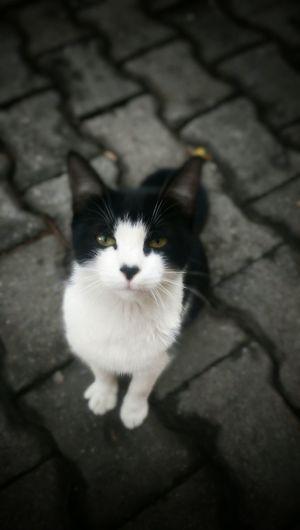 Kedi Cat Htc One M8 Htcphotography