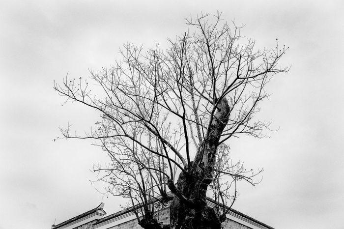 Blackandwhite Bare Tree Tree Branch No People Day Low Angle View Architecture Sky Building Exterior Built Structure Nature Outdoors