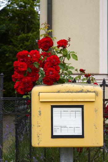 Red flowering plant against building