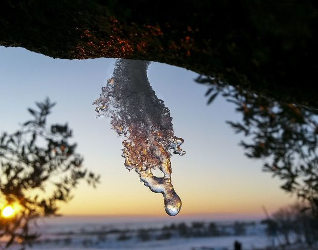 Water Nature Tree Focus On Foreground Outdoors Beauty In Nature Day Clear Sky Motion No People Sky Close-up Crystal Snow Nature Photography Sunrise Landspace Mothernature Natureporn Nature Tree Sunset Winter Portrait