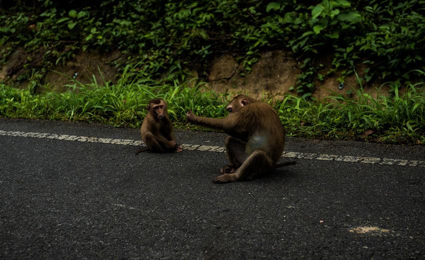 Monkeys sitting on a road